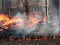 Report: Changing Fire Regimes and Management Strategies