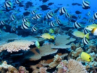 Ocean heatwaves dramatically shift habitats