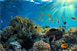 Marine Ecosystem Risk Team to Hold Sanctuaries Climate Priorities Virtual Workshop