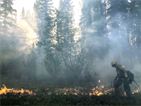 Are the unprecedented 2019 Southcentral Alaska Fires a result of anthropogenic climate change?