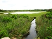 NOAA-funded report highlights threat of climate change to estuaries